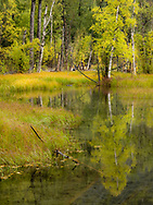 Fall colors begin to emerge around this pond in Southcentral Alaska. Morning.