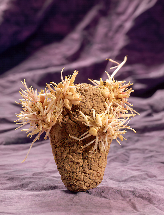 Edition of 49 includes all sizes<br /> Potato Still Life - Bad Hair Potato. Early images in the Potato Series