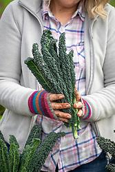 Harvesting Kale 'Cavolo Nero' syn. 'Nero di Toscana'