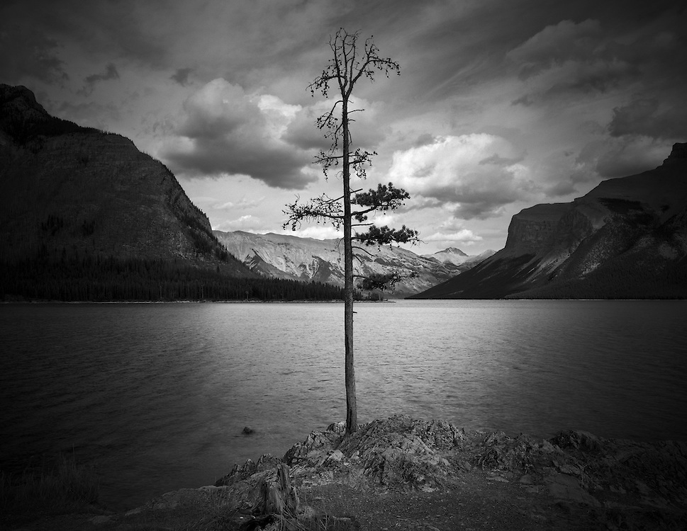 Lone Pine, Lake Minnewanka, AB