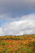 Colorful Fall trees on mountain under blue skies.