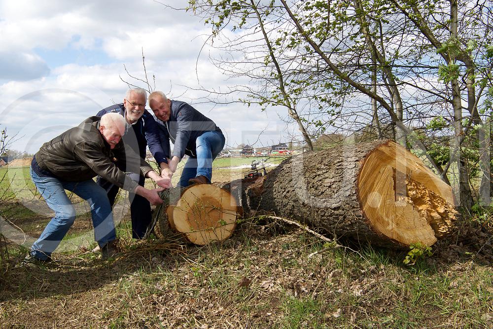 OMMEN - Boom in vuur.<br /> Foto: Jan Makkinga (l) Gerrit Steen (m) en Eddy Mooijers kunnen de boom met man kracht niet weg krijgen.<br /> FFU PRESS AGENCY COPYRIGHT FRANK UIJLENBROEK