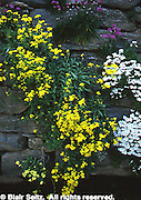 Floral on Wall, Morris Arboretum of University of Pennsylvania, Philadelphia, PA, gardens and arboretums