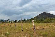 Fence<br /> Savanna <br /> Rurununi<br /> GUYANA<br /> South America