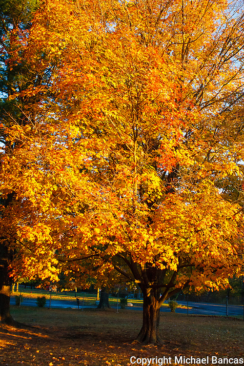 Woodstock in the fall New York