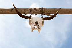 cow skull on a wooden post