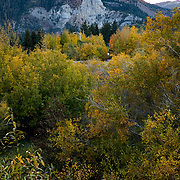The Fall season in the Eastern Sierras is one of the most beautiful seasons to visit. Famed Mammoth Rock can be seen over a grove of colorful trees and bushes.