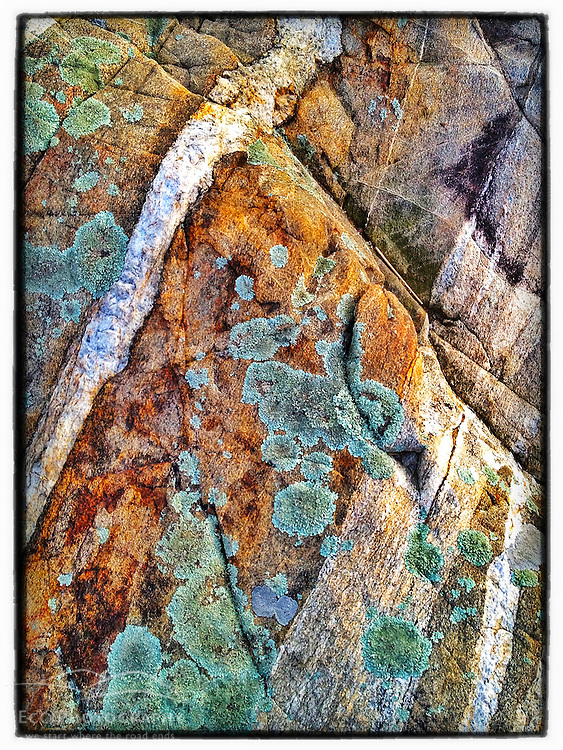 """Lichens on rock ledge next to Little Harbor in Portsmouth, New Hampshire. iPhone photo - suitable for print reproduction up o 8"""" x 12""""."""