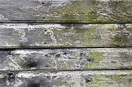 Wood natural textures