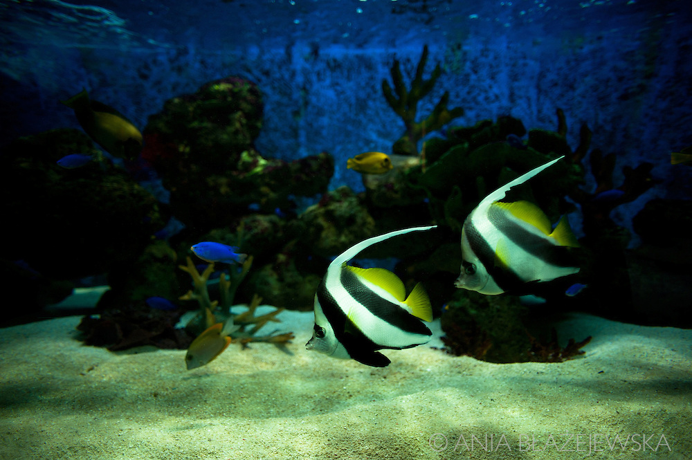 Philippines, Manila. Manila Ocean Park - one of the attractions of Manila