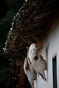 Sao Roque de Minas_MG, Brasil...Parque Nacional da Serra da Canastra em Sao Roque de Minas, Minas Gerais. Na foto caveira de boi em uma casa...Serra da Canastra National Park in Sao Roque de Minas, Minas Gerais. In this photo bull skull...Foto: JOAO MARCOS ROSA / NITRO...