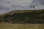 Cambara do Sul_RS, Brasil.<br /> <br /> Zona rural do municipio de Cambara do Sul no Rio Grande do Sul.<br /> <br /> Rural area in Cambara do Sul, Rio Grande do Sul.<br /> <br /> Foto: JOAO MARCOS ROSA / NITRO