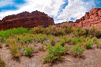 Hiking to Indian Creek, the Meander Canyon section of the Colorado River in Canyonlands National Park, Utah, USA.