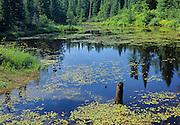 Wetland<br /> Worthington<br /> Ontario<br /> Canada