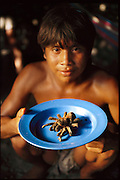 Chaurino Perez Andrate, 17, offers a plate-sized sample of roasted Theraphosa leblondi, the world's largest tarantula in his village of Sejal, Venezuela. Chaurino stuns the leblondi by whacking it with a stick, gathers its legs, and lowers it onto the fire. The spider makes a final hiss as its insides heat up and it shoots out a yard-long spurt of hot juice. After it is roasted for about seven minutes, its charred hairs are rubbed away and the legs pulled off. When we crack them open, there's white meat.(Man Eating Bugs page 175)