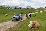 Walkers pass grazing cows near the collection of Slovenian herders mountain huts in Velika Planina, on 26th June 2018, in Velika Planina, near Kamnik, Slovenia. Velika Planina is a mountain plateau in the Kamnik–Savinja Alps - a 5.8 square kilometres area 1,500 metres 4,900 feet above sea level. Otherwise known as The Big Pasture Plateau, Velika Planina is a winter skiing destination and hiking route in summer. The herders huts became popular in the early 1930s as holiday cabins known as bajtarstvo but these were were destroyed by the Germans during WW2 and rebuilt right afterwards by Vlasto Kopac in the summer of 1945.
