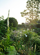 Sunrise in the blue and white garden at Cothay Manor, Greenham, Wellington, Somerset, UK
