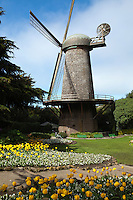 """In 1902, the Golden Gate Park saw the completion of the Dutch Windmill - also referred to the """"North Windmill"""".  As time passed, the windmill was given a motorized pump since it no longer needed the wind to facilitate its function.  In 1980 the exterior of the structure received repairs also the time that the Queen Wilhelmina Tulip Garden was created on the neighboring grounds."""