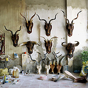 Interior of a workshop making decorative animal heads using real horns from deer and water buffalo in Thuy Ung, water buffalo horn processing village, Ha Tay province, Vietnam. With Vietnam's growing population making less land available for farmers to work, families unable to sustain themselves are turning to the creation of various products in rural areas.  These 'craft' villages specialise in a single product or activity, anything from palm leaf hats to incense sticks, or from noodle making to snake-catching. Some of these 'craft' villages date back hundreds of years, whilst others are a more recent response to enable rural farmers to earn much needed extra income.