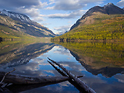 Driftwood logs in Kintla Lake with glassy water reflection of the Boundary Mountains and Parke Peak, Glacier National Park, Montana.