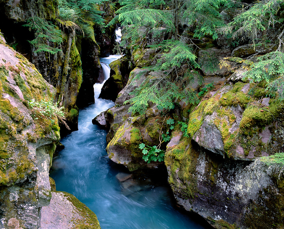 The ice blue waters of Avalanche Creek cut through a corridor of mossy rocks, Glacier National Park, Montana.