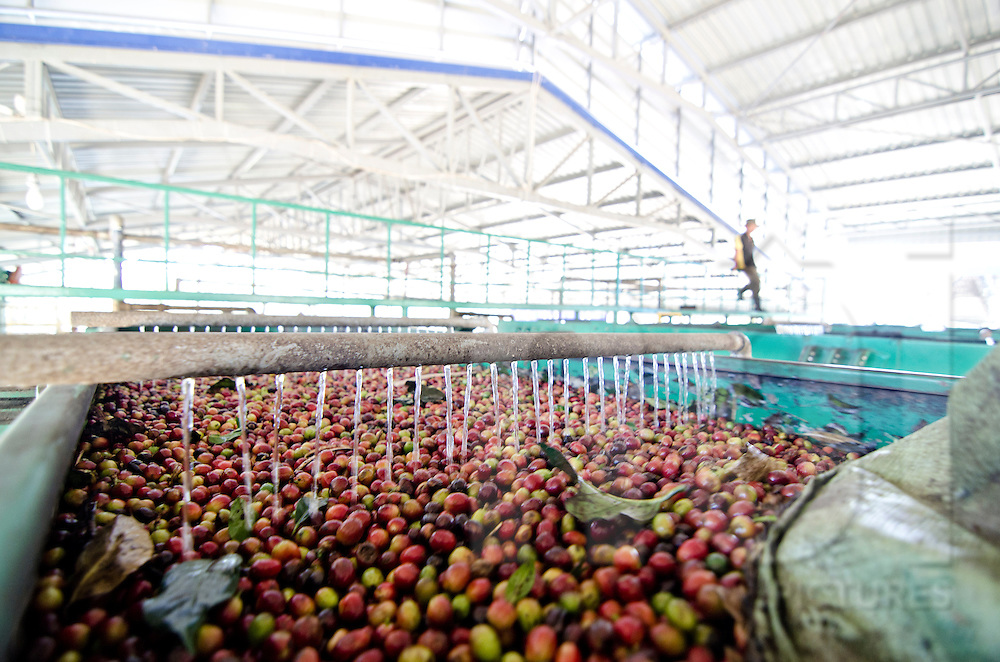 Coffee factory in Paksong, Laos, Asia. Fresh beans are washed.