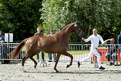 Ilaya<br /> Centrale Keuring Zeeland - Vrouwenpolder 2016<br /> © Hippo Foto - Dirk Caremans<br /> 02/07/16