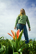 WOODBURN, OR - A woman takes advantage of a clear spring day in Oregon to play in the field of the annual Woodburn tulip festival.  The event draws people from Portland and tourists from afar to admire the flowers, enjoy the festivities, and welcome the beauty of spring in the Pacific Northwest. Tulips, of the genus Tulipa, are perennial bulbous flowering plants of the Liliaceae family. (Model Released)