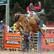 Joe Fentiman from Waitati in action during the Open Bareback competition at the Southland Rodeo, Invercargill,  New Zealand. 29th January 2012