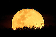 """The """"Super Moon"""" rises over the Darling Range in Perth, Western Australia"""