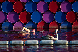 © Licensed to London News Pictures. 24/09/2018. London, UK. An early morning swimmer passes The London Mastaba by Christo in the Serpentine Lake on a cold Autumn morning in Hyde Park, central London. Photo credit: Ben Cawthra/LNP
