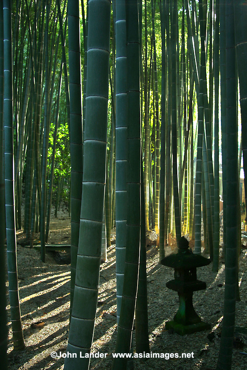 """Hokokuji Bamboo Garden; sometimes called """"The Bamboo Temple"""" because of this grove; elsewhere at Hokokuji the zen garden, trees and plants are blended with the hills and natural background of the landscape."""