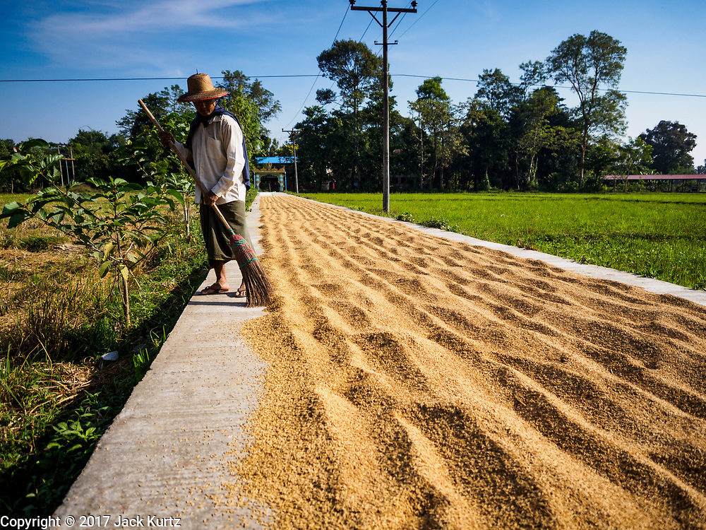 "21 NOVEMBER 2017 - INMA, AYEYARWADY REGION, MYANMAR: A man spreads rice to dry on a paved road in his village in the Ayeyarwady  Delta. Myanmar is the world's sixth largest rice producer and more than half of Myanmar's arable land is used for rice cultivation. The Ayeyarwady Delta is the most important rice growing region and is sometimes called ""Myanmar's Granary."" The UN Food and Agriculture Organization (FAO) is predicting that the 2017 harvest will increase over 2016 and that exports will surge to 1.8 million tonnes.   PHOTO BY JACK KURTZ"