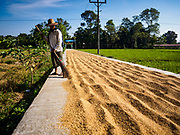 """21 NOVEMBER 2017 - INMA, AYEYARWADY REGION, MYANMAR: A man spreads rice to dry on a paved road in his village in the Ayeyarwady  Delta. Myanmar is the world's sixth largest rice producer and more than half of Myanmar's arable land is used for rice cultivation. The Ayeyarwady Delta is the most important rice growing region and is sometimes called """"Myanmar's Granary."""" The UN Food and Agriculture Organization (FAO) is predicting that the 2017 harvest will increase over 2016 and that exports will surge to 1.8 million tonnes.   PHOTO BY JACK KURTZ"""