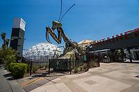 Praying Mantis Sculpture @ Container Park Entrance