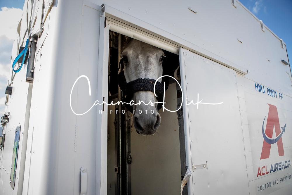 Departure of the horses for Calgary at Liege Airport, Belgium<br /> Harley van den Bisschop, Philippaerts Nicola<br /> Spruce Meadows Masters - Calgary<br /> © Hippo Foto - Dirk Caremans<br /> 01/09/2018