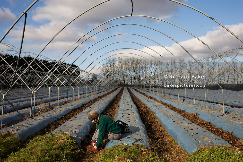 A lone female replaces boot after blister inspection during walk through a farmer's winter polytunnels, empty of crops.