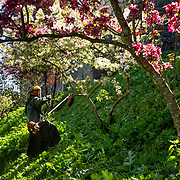 A novice brother takes care of the abbey's green spaces. 04-05-16<br /> Un frère novice entretient les espaces verts de l'abbaye. 04-05-16