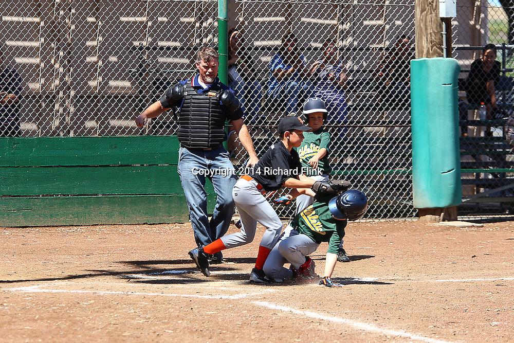 RVLL Minors Baseball 2014