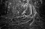 Soberanía National Park, Panama.