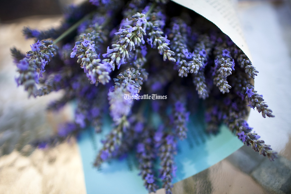 Lavender sits wrapped up in a bouquet. The plant has many uses including as an ingredient in cosmetics, fragrances and baking. (Jordan Stead / The Seattle Times)