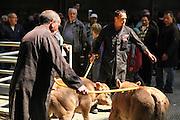 Reportage au foirail, marché au bestiaux de Bourg-en-Bresse