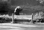 Belgie, maas, 20-6-1987Reisreportage voor een reisnummer van Intermediair van een tocht over de Maas in een klein motorjachtje, van Maasbracht in Nederland tot aan Charleville-Mezieres in N.-   Frankrijk. Sluisjes die handmatig bediend werden, maar ook een bij Ternaaien met een hoogteverschil van 12 meter.. Het was een reportage van 'slow journalism'. Varend op de rivier verandert het besef van tijd en snelheid. Foto: Flip Franssen