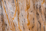"Tree wood pattern. Hike to Photographer's Point, Wind River Range, Bridger-Teton National Forest, Rocky Mountains, Wyoming, USA. The Continental Divide follows the crest of the ""Winds""."