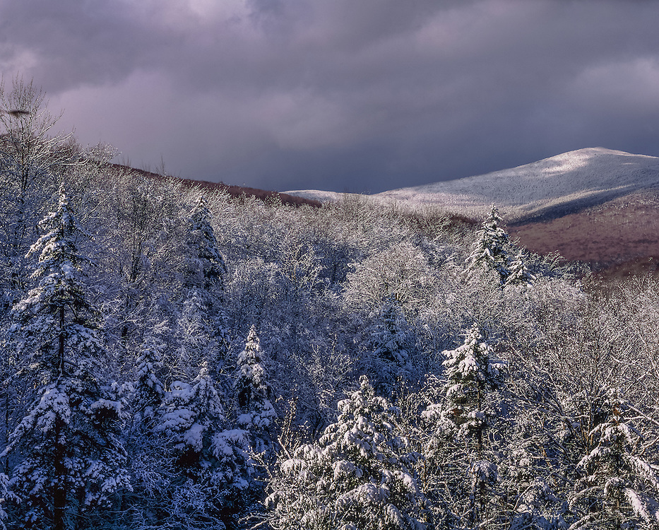 Snow covered forest and south peak of Mt Moosilauke, White Mtn National Forest, NH