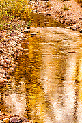 Fall Color in a Mountain Stream Grand Teton National Park Wyoming