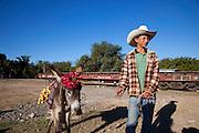 Donkey, Burro, El Fuerte, Sinaloa, Mexico