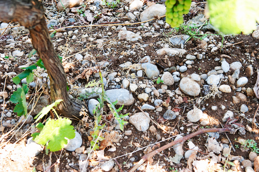 Soil type: sandy gravely, pebbles Kantina Miqesia or Medaur winery, Koplik. Albania, Balkan, Europe.