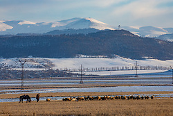 Man, Horse & Sheep, Lori Province
