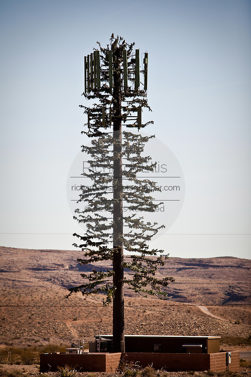 Mobile phone cell tower disguised as a pine tree in the high desert of Nevada.